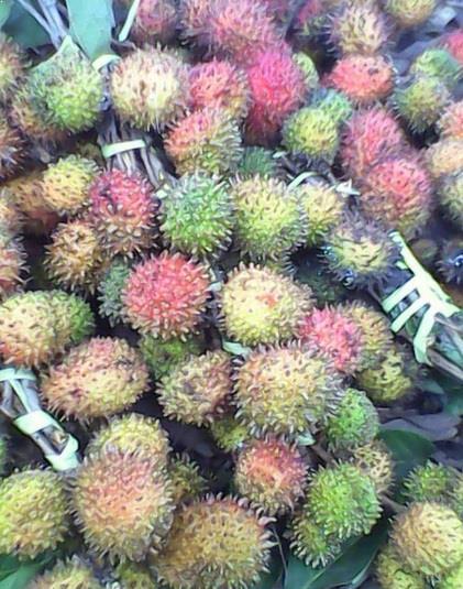 Rambutan Aceh