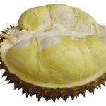 Buah Durian Montong