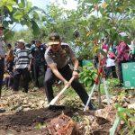 Bertanam Rambutan