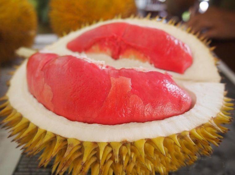 Durian merah banyuwangi