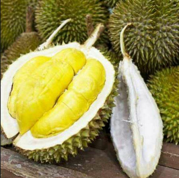 Buah Durian Matahari