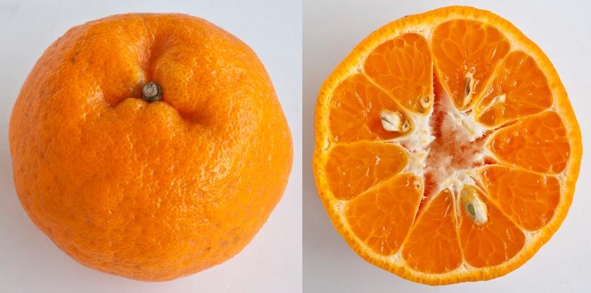 Gambar Jeruk Mandarin
